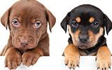 Blaasgruis en blaasontsteking bij de hond