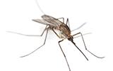 Muggen op reis